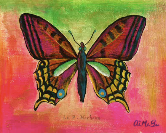 Machaon Blog